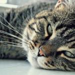 cat-1181938_1280