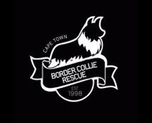 BORDER COLLIE RESCUE CAPE TOWN